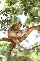 scimmia nel parco nazionale di kam shan, kowloon, Hong Kong foto