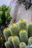 tutti i cactus foto