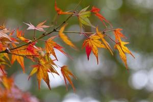 foglie d'autunno.