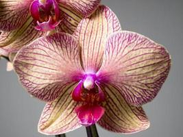 orchidée foto