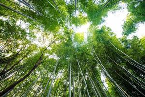 la foresta di bambù di Kyoto, Giappone foto