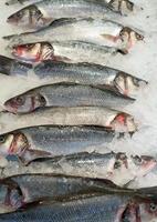 pesce congelato sul mercato. foto