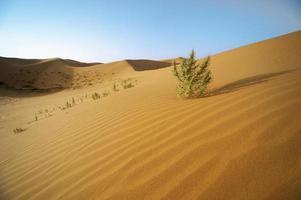 il deserto del sahara foto