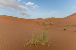 erba nel deserto marocchino foto