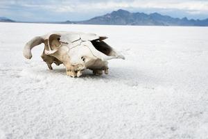 teschio del deserto foto