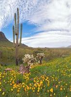 deserto fiorito foto