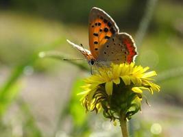 piccola farfalla sulla luce posteriore # 7 foto