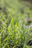 un'immagine di erba con gocce di pioggia