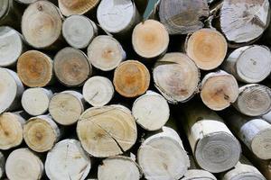 superficie del tronco per trama di sfondo foto