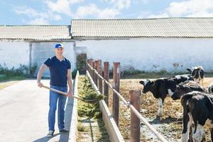 contadino sta lavorando in fattoria con vacche da latte foto