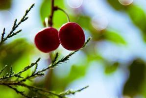 vitamine su un ramo