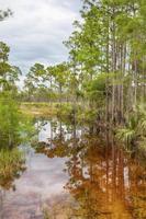 alberi tropicali nella palude dei terreni paludosi foto