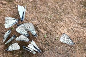 farfalle bianche sulla sabbia foto