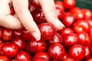 ciliegia fresca deliziosa in mano della donna, primo piano foto
