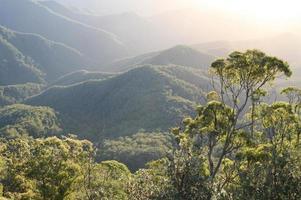 alba della foresta pluviale