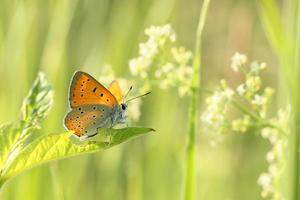 primo piano di una farfalla