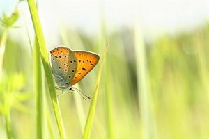 primo piano di una farfalla foto