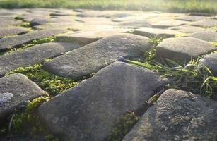 vecchia strada di ciottoli in pietra con muschio erba e sole della sera foto