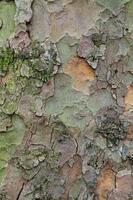 tavola di legno di corteccia di legno con sfondo di muschio foto