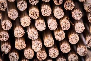 pezzetti di bambù foto