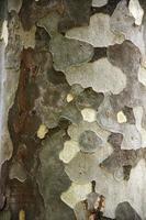 oltre 100, albero, corteccia, botanica, tessuto, corteccia, tronco