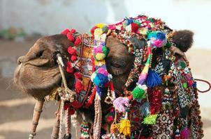 cammello decorato alla fiera pushkar. Rajasthan, India. foto