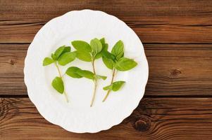tre germogli di menta selvatica fresca sul piatto bianco