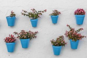 vaso di fiori blu su un muro foto