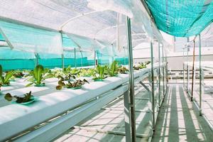 fattoria di coltura idroponica di verdure verdi. foto