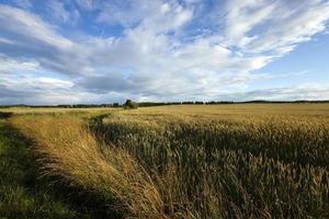 campi agricoli di confine foto