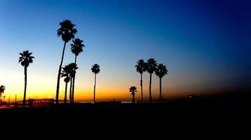 palme da spiaggia al sole foto