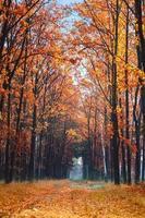 vicolo nel parco d'autunno.