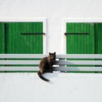 gatto su un muro bianco con porta verde foto