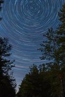 foresta su uno sfondo di cielo stellato foto