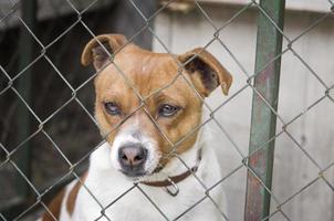 cane dietro la rete metallica foto