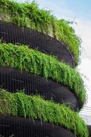 edificio coperto di vegetazione foto