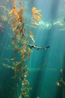 piccolo squalo nell'oceano foto