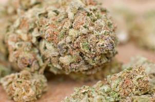 estrema stretta di germoglio di marijuana con DOF molto superficiale foto