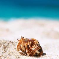 paguro in spiaggia foto