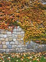 foglie di autunno su un muro all'interno della fortezza di Kalemegdan, Belgrado foto