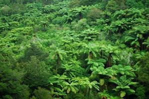 pungas e bush nativo sullo sfondo, nz