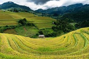 campi di terrazze dorate nel nord del vietnam