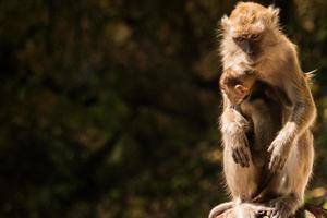 scimmia macaco madre e figlio al di fuori delle grotte di Batu