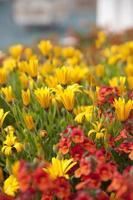 Blumenbeet foto