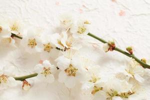 fiore di prugna