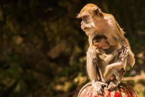 scimmia macaco madre e figlio al di fuori delle grotte di Batu foto