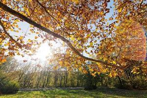 foglie nel parco foto