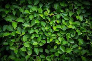 primo piano di foglie verdi foto