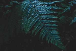 foglie di una felce foto