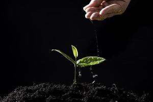 la mano degli agricoltori innaffia le piantine su fondo nero